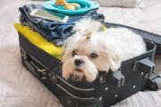 Как заранее записаться на ветконтроль с животным в аэропорту